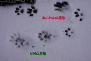 20160125雪足跡とみいたんの1.jpg