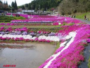 20160416大道理の芝桜.jpg