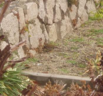 鳥090126.jpg